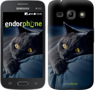 """Чехол на Samsung Galaxy Star Advance G350E Дымчатый кот """"825u-210"""""""