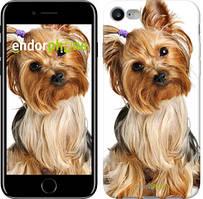 """Чехол на iPhone 7 Йоркширский терьер с хвостиком """"930c-336"""""""