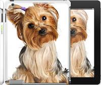 """Чехол на iPad 2/3/4 Йоркширский терьер с хвостиком """"930c-25"""""""