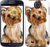 """Чохол на Samsung Galaxy S4 i9500 Йоркширський тер'єр з хвостиком """"930c-13"""""""