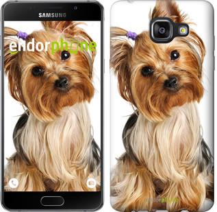 """Чехол на Samsung Galaxy A5 (2016) A510F Йоркширский терьер с хвостиком """"930c-158"""""""