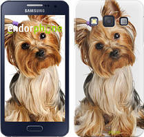 "Чохол на Samsung Galaxy A3 A300H Йоркширський тер'єр з хвостиком ""930c-72"""