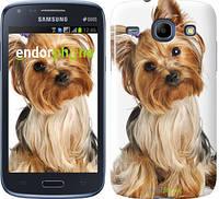 """Чехол на Samsung Galaxy Core Plus G3500 Йоркширский терьер с хвостиком """"930u-359"""""""
