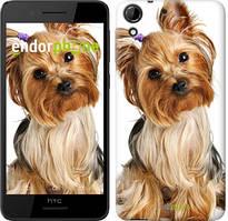 """Чохол на HTC Desire 728G Йоркширський тер'єр з хвостиком """"930u-145"""""""