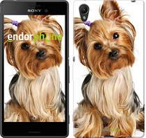 """Чохол на Sony Xperia XA Йоркширський тер'єр з хвостиком """"930c-399"""""""