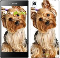 """Чохол на Sony Xperia Z5 Premium Йоркширський тер'єр з хвостиком """"930u-345"""""""