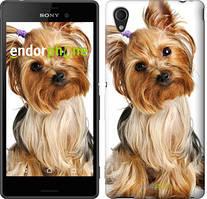 """Чохол на Sony Xperia C4 Йоркширський тер'єр з хвостиком """"930u-295"""""""
