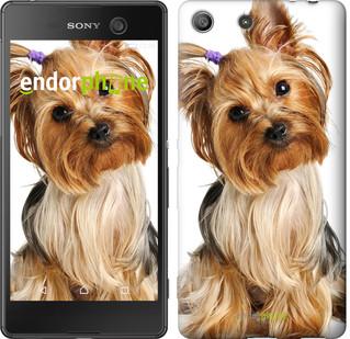 "Чехол на Sony Xperia M5 Йоркширский терьер с хвостиком ""930u-217"""