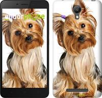 """Чехол на Xiaomi Redmi Note 2 Йоркширский терьер с хвостиком """"930c-96"""""""