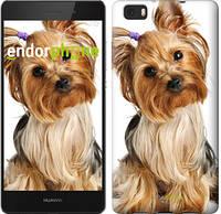 """Чехол на Huawei P8 Max Йоркширский терьер с хвостиком """"930u-371"""""""