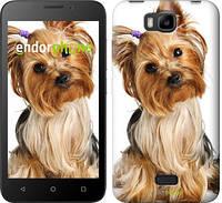 """Чехол на Huawei Ascend Y5C Йоркширский терьер с хвостиком """"930u-146"""""""