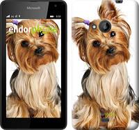 """Чехол на Microsoft Lumia 640 Йоркширский терьер с хвостиком """"930c-273"""""""