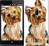 """Чехол на Nokia Lumia 830 Йоркширский терьер с хвостиком """"930u-329"""""""