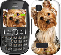 """Чехол на Nokia Asha 200 Йоркширский терьер с хвостиком """"930u-247"""""""