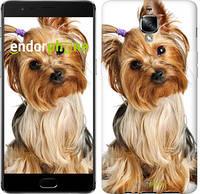 """Чехол на OnePlus 3 Йоркширский терьер с хвостиком """"930u-334"""""""