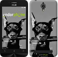 """Чехол на Asus ZenFone Go ZC451TG Доберман """"2745u-276"""""""