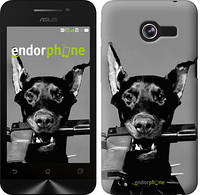 "Чехол на Asus ZenFone Max ZC550KL Доберман ""2745c-271"""