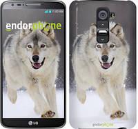 "Чехол на LG K8 K350E Бегущий волк ""826c-297"""