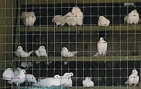Сетка для ограждения животных и птиц 2х100м СИНТОФЛЕКС Д (Италия)