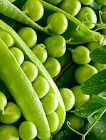 Семена  гороха Преладо F1, сверхранний 1 кг, Syngenta, Голландия