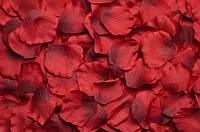 Искусственные лепестки роз бордовые двухцветные, 500-600 шт./уп.