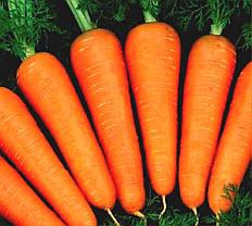 Семена моркови Абако F1 /Seminis, 1 млн. семян /1000000 сем - ранний гибрид, тип Шантане, фр. 1,4-1,6, фото 3
