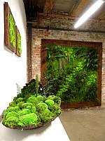 Стены из мха кочками от ARTIS GREN