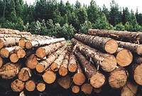 В волынских лесхозах процветает коррупция, - прокуратура