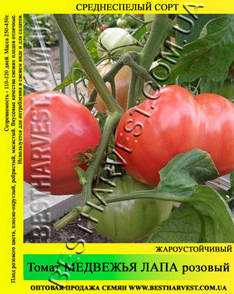 Семена томата Медвежья Лапа розовый 50гр, фото 2