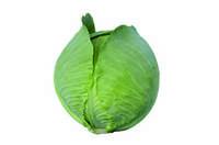 Семена капусты Синтекс F1 (Sintex F1). Упаковка 2 500 семян. Производитель Bejo Zaden