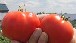 Семена томата детерминантного Дебют F1 1000 сем/Seminis — среднерослый, с длительным периодом плодоношения, фото 3