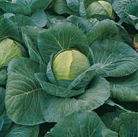 Семена капусты Краутман F1 (Krautman F1). Упаковка 2 500 семян. Производитель Bejo Zaden