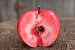 Саджанці яблунь  Сирена (червона м'якоть, красная мякоть)