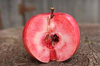 Саджанці яблунь Сирена (червона м'якоть, красная мякоть), фото 1