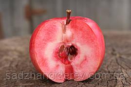 Саджанці яблунь  Сирена