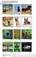 Фотопечать на стекле Животные