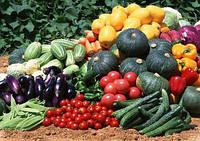 Семена овощей и кормовых культур