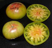 Семена томат Captain Lucky (Счастливый Капитан) (авторские семена от Кулика А.И.) 15 шт., фото 1