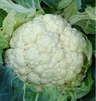 НОВАРИЯ F1 - семена цветной капусты,Enza Zaden, фото 1