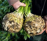БАЛЕНА - семена сельдерея корневого 10 000 семян, Bejo Zaden