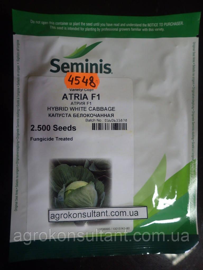 Поиск: Семена капусты Атрия F1 (Seminis) 2500 семян — средне-поздняя (115-120 дней), белокочанная