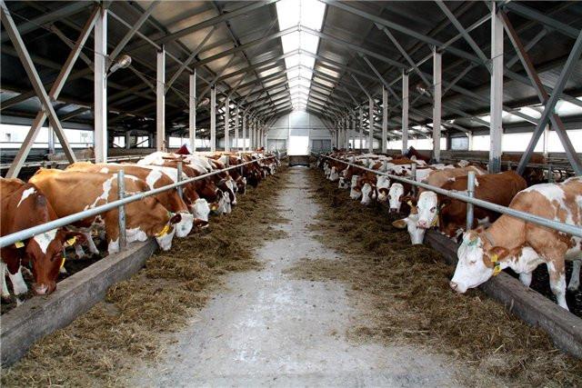 На Львовщине три фермерских хозяйства получили более 200 тыс. грн господдержки