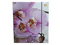 Папка для зошитів Тетрада А5 картонна на гумці з пластиковою вставкою мікс