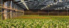 Светильник для растений купольный  Highbay SL-100/FS 100W IP65 Код.58820, фото 2