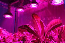 Светильник для растений с фитосветодиодами Highbay SL-150/FS 150W IP65 Код.58819, фото 3