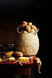∙ Oчиститель картофеля барабанного типа DORNOW 500-2000 кг/ч, фото 2
