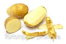 ∙ Очищувач картоплі барабанного типу DORNOW 500-2000 кг/год