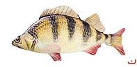 Игрушка-антистресс Рыба окунь 23 SOFT TOYS