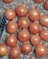 Семена лука Тамара F1 (Tamara F1). Упаковка 10 000 семян. Производитель Bejo Zaden