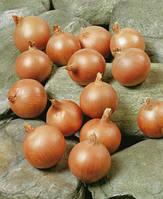 Семена лука Седона F1 (Sedona F1). Упаковка 250 000 семян. Производитель Bejo Zaden